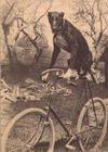 Velorution_vintage_dog_on_a_bike
